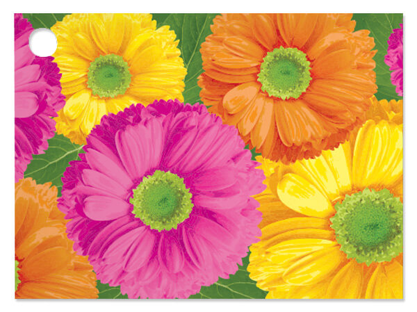 Gerber Daisies Theme Gift Cards 3-3/4x2-3/4""