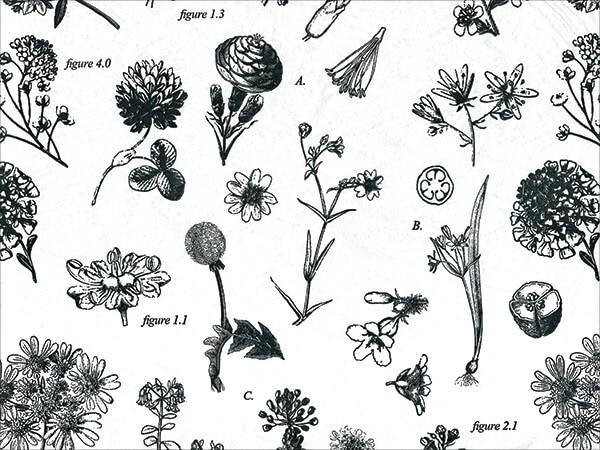 "Botanicals Tissue Paper 20x30"", 12 Soft Fold Sheets"