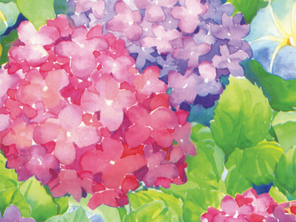 "Hydrangeas  26"" x 833' Full Ream Roll Gift Wrap"