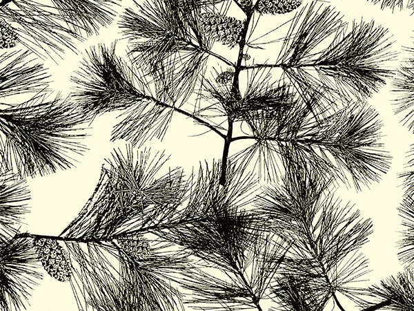"""Black Pines Gift Wrapping Paper 30"""" x 417', Half Ream Roll"""